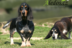 09-Aledos-smaller